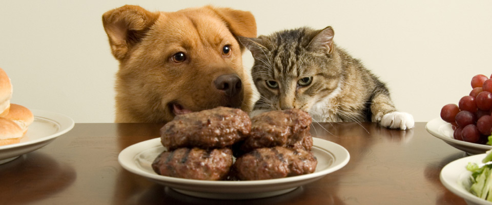 Can Cats Eat Dog Food For A Day