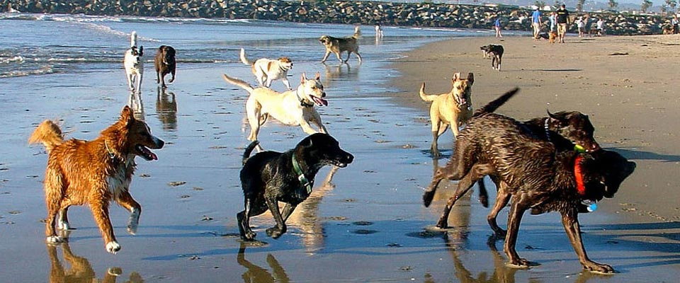 slider_dogsonbeach