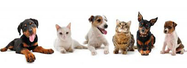 dogs cat line up
