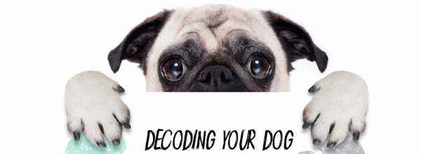 Decoding Your Dog Feature Image