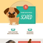 decoding-your-dog-infographic